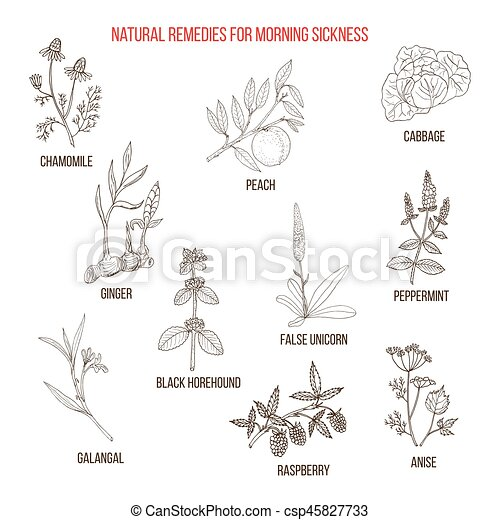 Best herbal remedies for morning sickness - csp45827733