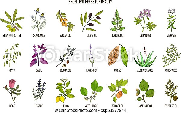 Best herbs for beauty care - csp53377944