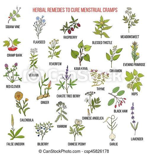 Best herbs for menstrual cramps treatment - csp45826178