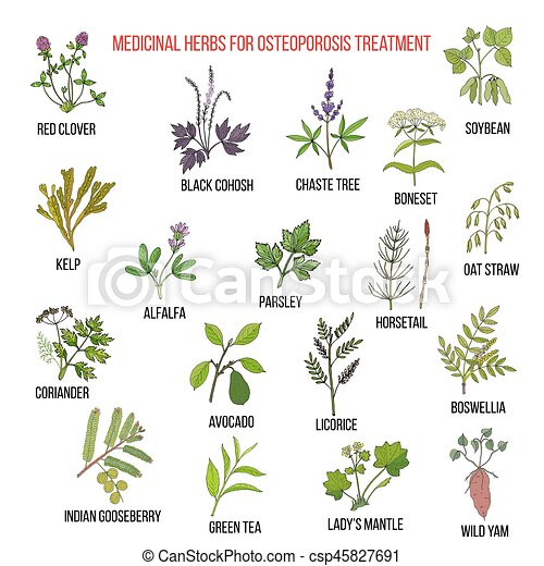 Best medicinal herbs for osteoporosis - csp45827691