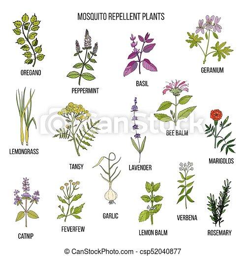 Best Mosquito Repellent Plants Hand Drawn Vector Set Of Medicinal