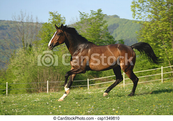 beta, häst - csp1349810