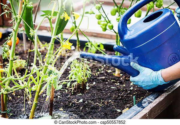 betriebe, angehoben, bewässerung, bett - csp50557852