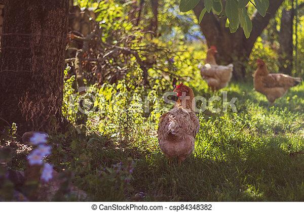 bezplatný oblast, zahrada, samička - csp84348382