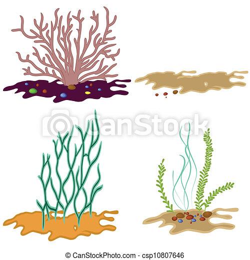 Bianco Alga Fondo Isolato Subacqueo Pietra Set Sabbia