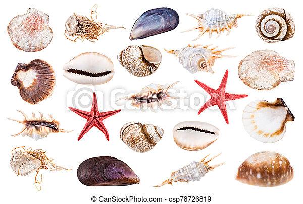 bianco, set, isolato, vario, seashells - csp78726819