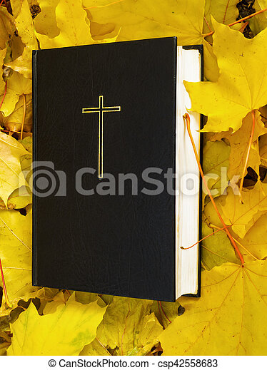 Bible  Holy bible book with fallen maple leaves