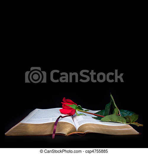 Bible On Black Background Open Bible With Red Rose On A