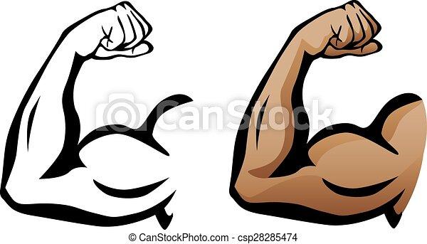 bicep, musculaire, fléchir, bras - csp28285474