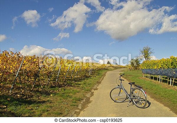 bicicleta, wineyards - csp0193625