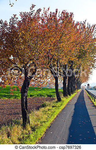 bicycle and pedestrian lane under trees - csp7697326