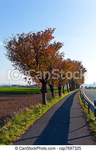 bicycle and pedestrian lane under trees - csp7697325