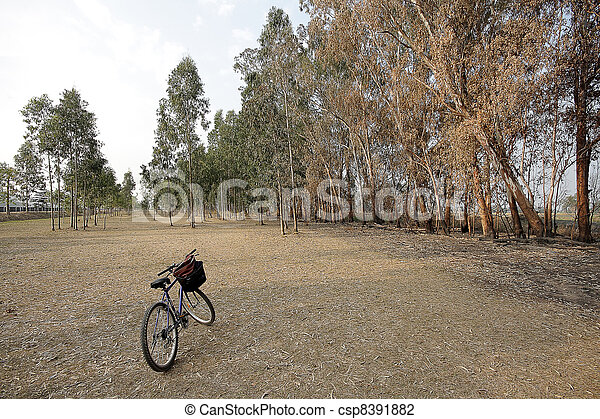 bicycle in a beautiful park - csp8391882