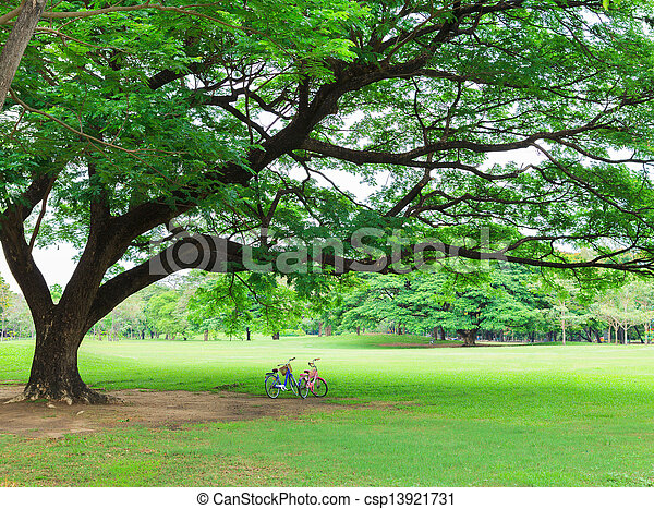Bicycle in a park - csp13921731