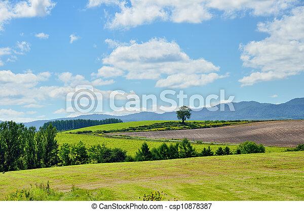 Vasto paisaje de biei, hokkaido. - csp10878387