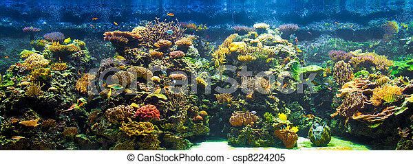 big aquarium panorama - csp8224205