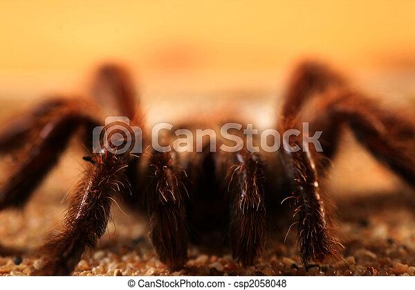 Big bird spider - csp2058048