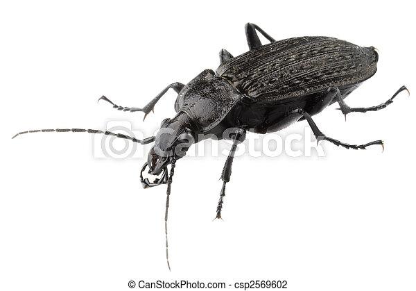 Big black bug - csp2569602