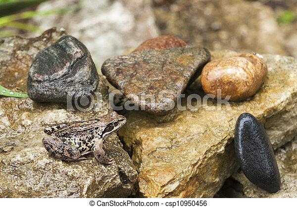 Big brown frog on a rock - csp10950456
