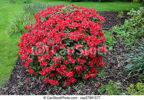 Big bush pics