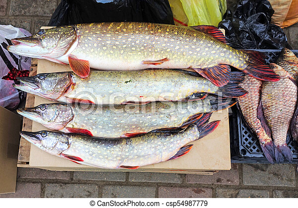 Big catch of river fish - csp54987779
