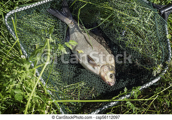 Big caught fish, bream in fisherman's nets in grass. Concept of successful fishing, luck, fortune, success, active rest, hobby, countryside relaks - csp56112097