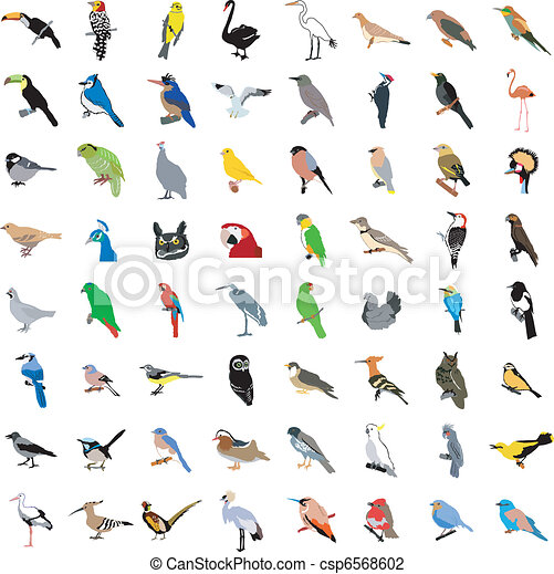 Big collection of birds - csp6568602