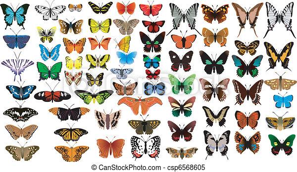 big collection of butterflies - csp6568605