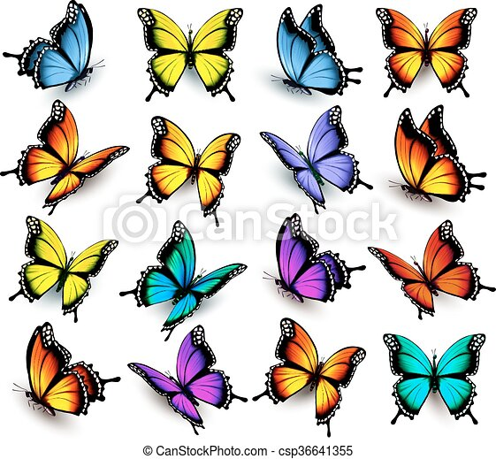 Big collection of colorful butterflies. Vector - csp36641355