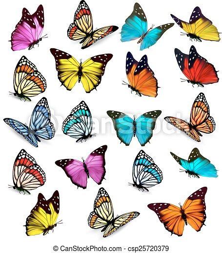 Big collection of colorful butterflies. Vector - csp25720379