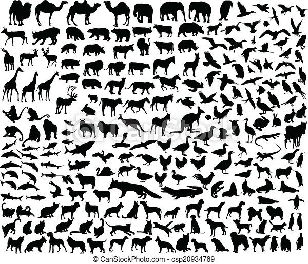 big collection of different animal  - csp20934789