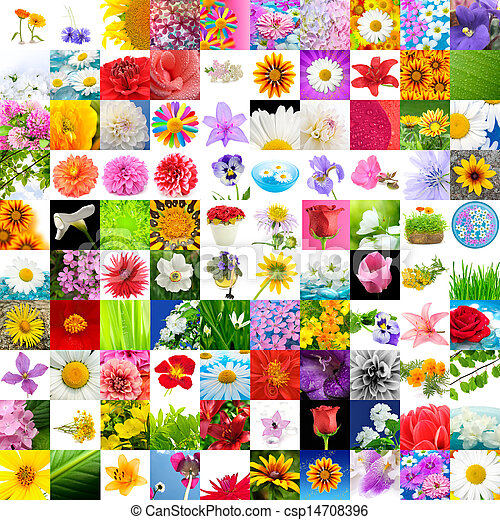 Big Collection of Flowers (Set of 100 Images) - csp14708396
