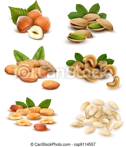 Big collection of ripe nuts. Vector - csp9114557