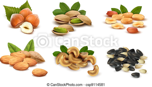 Big collection of ripe nuts. Vector - csp9114581