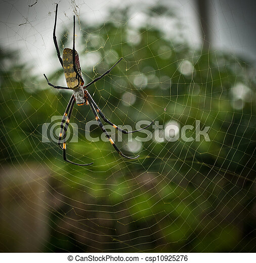 Big Colorful Banana Spider In Web Taken In Yunnan China This