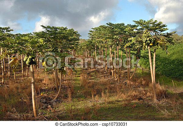 Big Crop in Hawaii - csp10733031