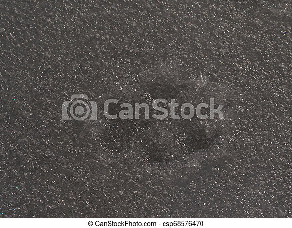 Big dog footprint. Paw print of dog or wolf in icy cover. - csp68576470