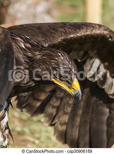 big eagle - csp30906189