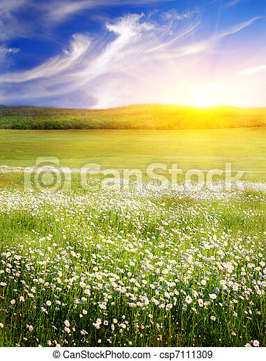 Big field of flowers on sunrise. Composition of nature. - csp7111309