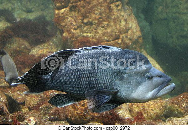 Big Fish - csp0012972