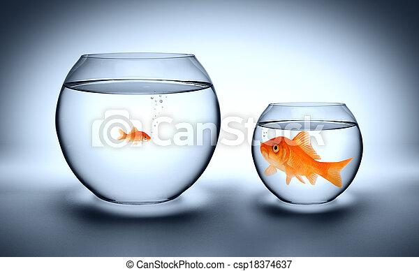 big goldfish in a small aquarium - csp18374637
