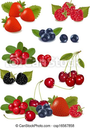 Big group of fresh berries. Photo-realistic vector illustration - csp16567858