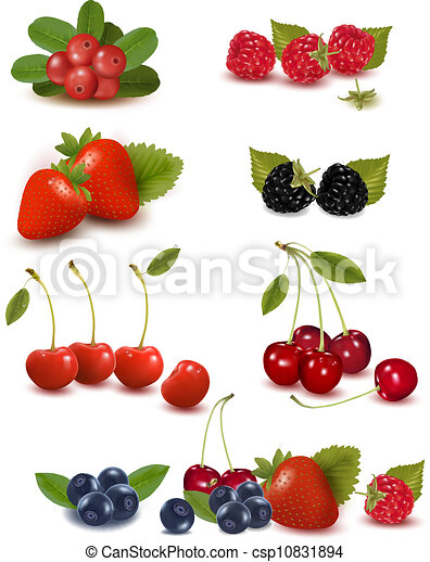Big group of fresh berries Vector illustration - csp10831894