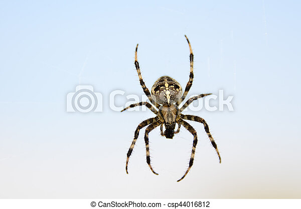 Big hairy spider eating - csp44016812