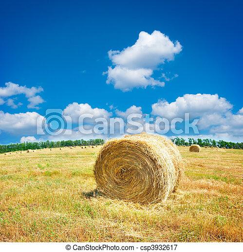 Big hay bale field in late summer - csp3932617
