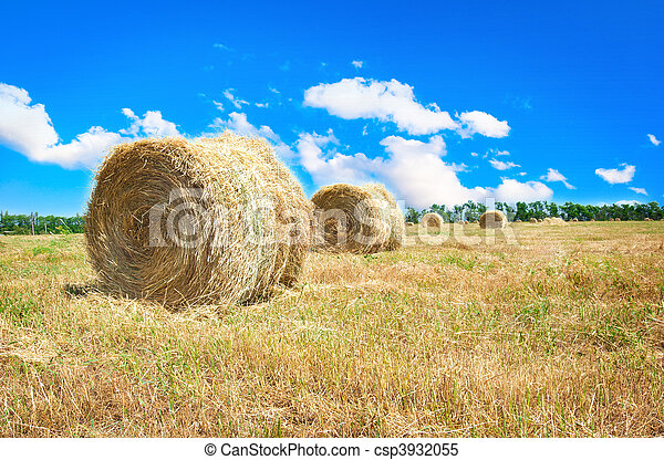 Big hay bale field in late summer - csp3932055