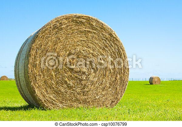 Big hay bale roll in a green field - csp10076799