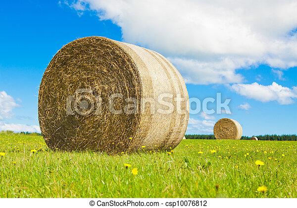 Big hay bale rollin a lush field - csp10076812
