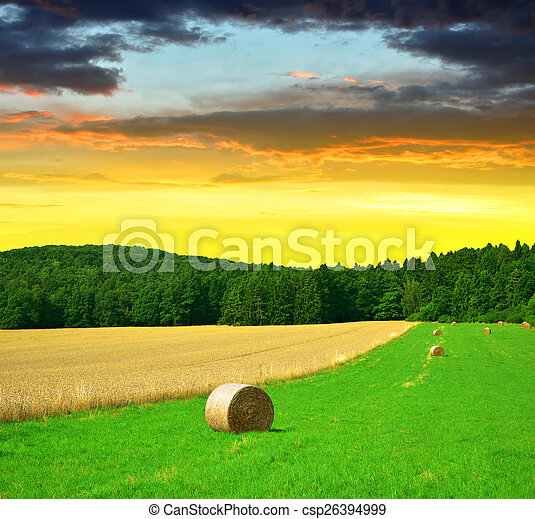 Big hay bale rolls - csp26394999