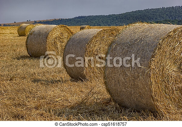 Big hay bales on the field after harvest - csp51618757